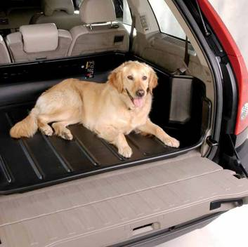 dog on Carbox boot liner